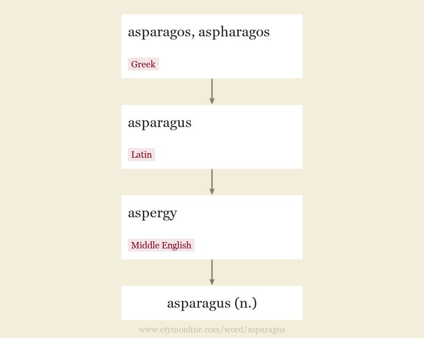 Origin and meaning of asparagus