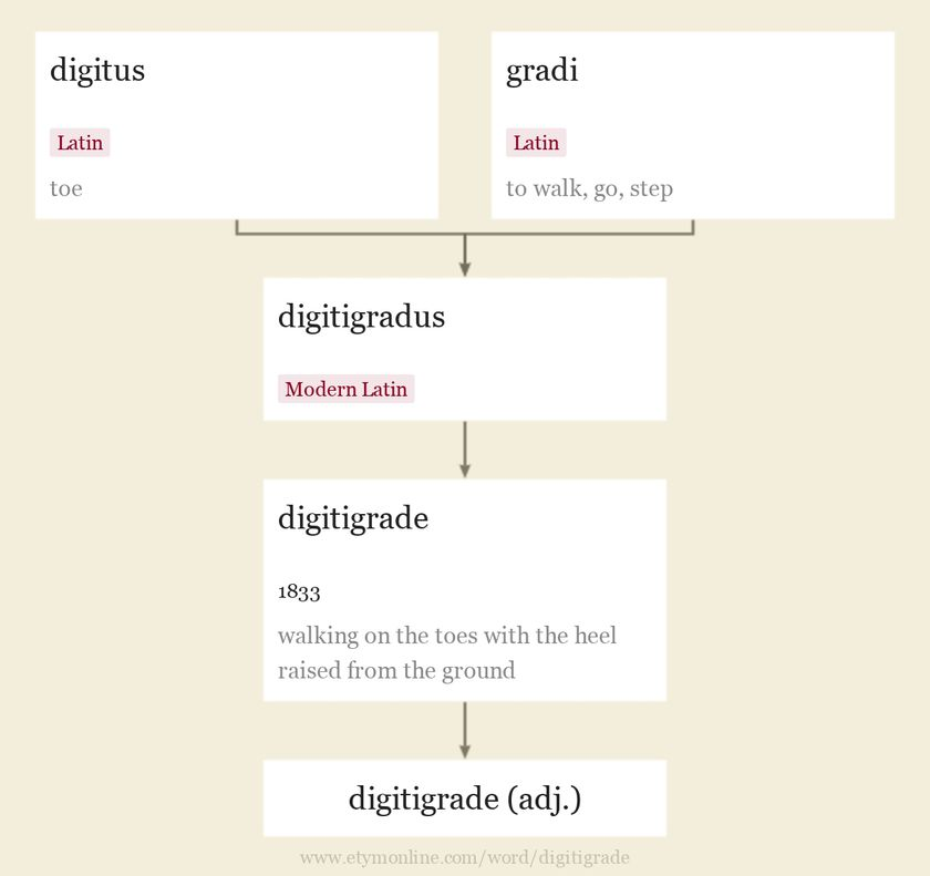 Origin and meaning of digitigrade