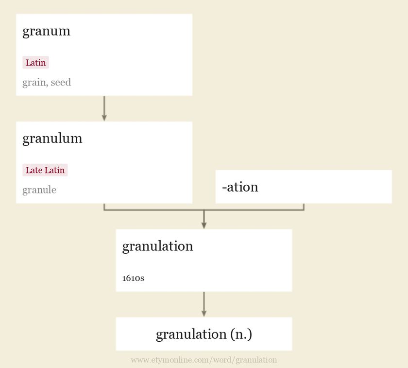 Origin and meaning of granulation