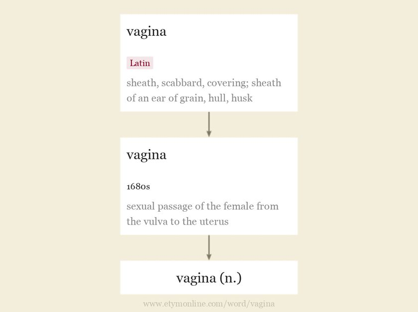 Origin and meaning of vagina